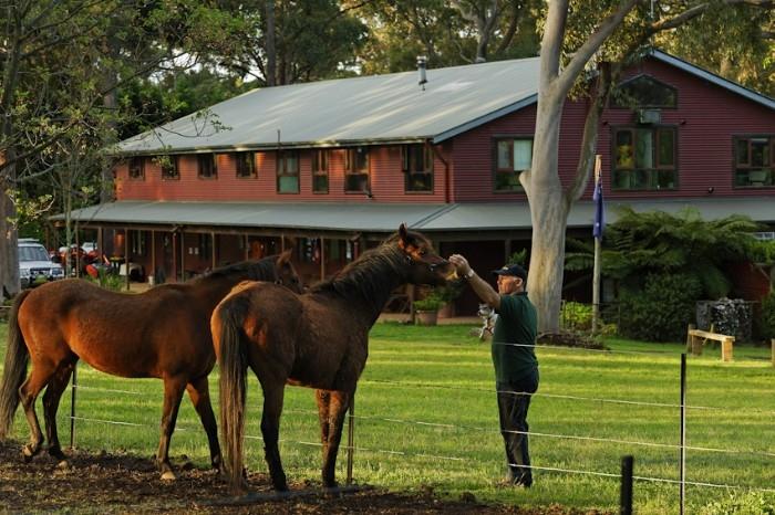 Visiting horses