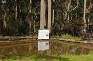 The Yabby Pond