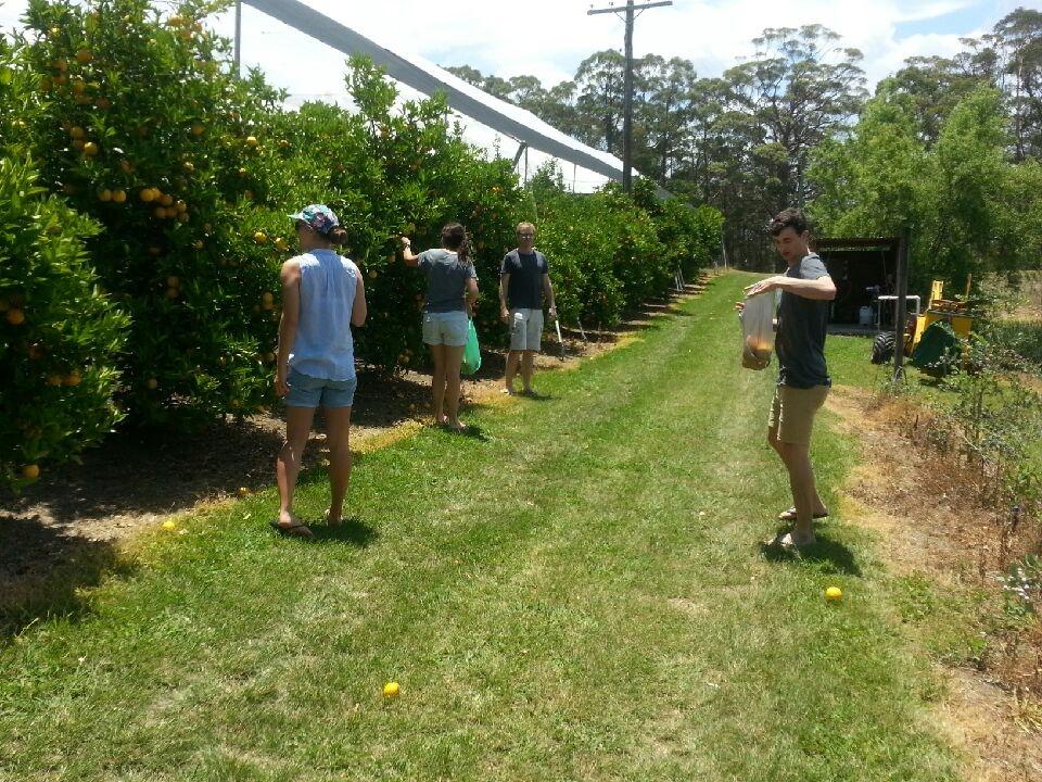 Fruit picking in season