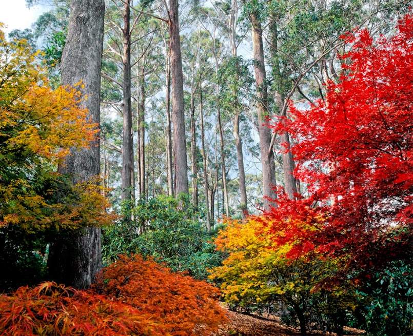 TomahROMA – Colourful Autumn Fair at Mt Tomah